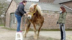 cav-201903-cavallo-coach-0-aufmacher-mit-TEASER-lir2406-v-amendo-schlank (jpg)