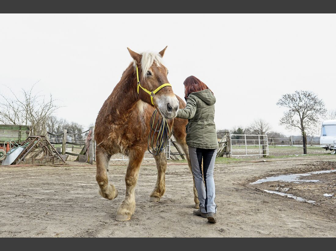 cav-201903-cavallo-coach-4-lir2198-v-amendo (jpg)