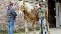 cav-201903-cavallo-coach-lir2127-v-amendo-schlank (jpg)