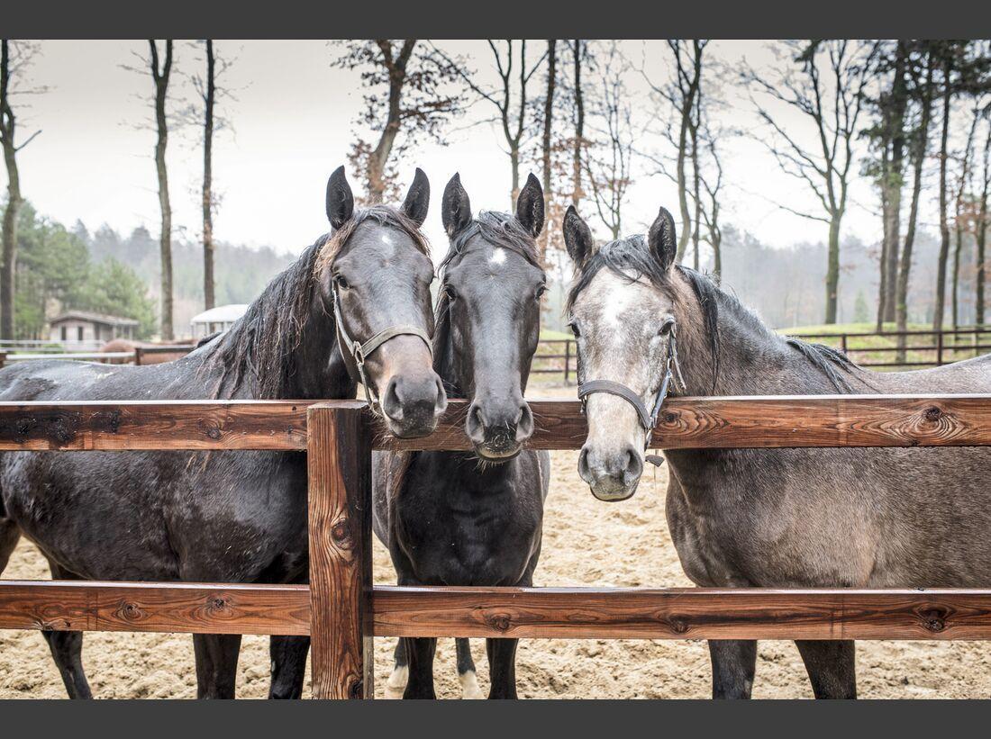 cav-201903-pferdezucht-stefan-aust-armstorf-1004-bearbeitet-joern-lehmann-v-amendo (jpg)