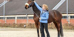 cav-201904-cavallo-coach-lir7586-mit-TEASER-v-amendo (jpg)
