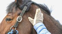 cav-201904-cavallo-coach-lir7595-v-amendo (jpg)