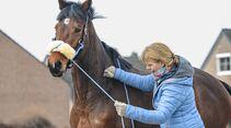 cav-201904-cavallo-coach-lir7630-v-amendo (jpg)