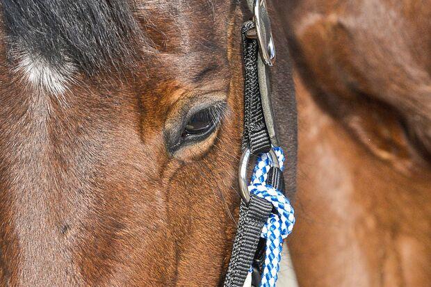 cav-201904-cavallo-coach-lir8234-v-amendo (jpg)