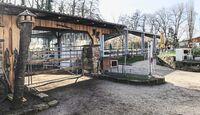 cav-201904-reitschultest-reiterhof-giehl-offenstall-reithalle-img3077-mit-TEASER-v-amendo (jpg)