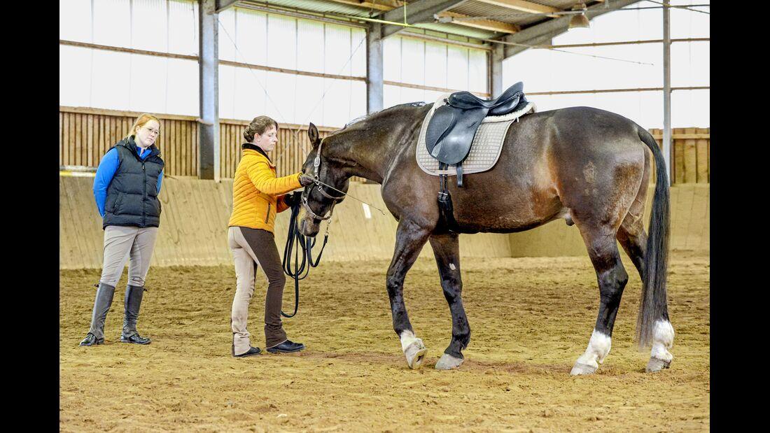 cav-201905-cavallo-coach-5-lir5329-v-amendo (jpg)