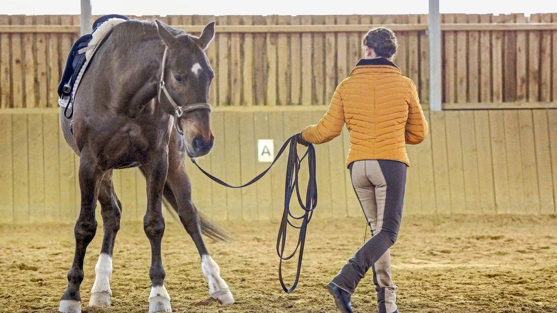 cav-201905-cavallo-coach-9-lir5435-mit-TEASER-v-amendo (jpg)