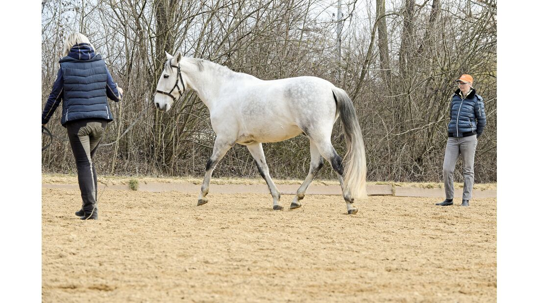 cav-201906-cavallo-coach-10-lir2203-v-amendo (jpg)
