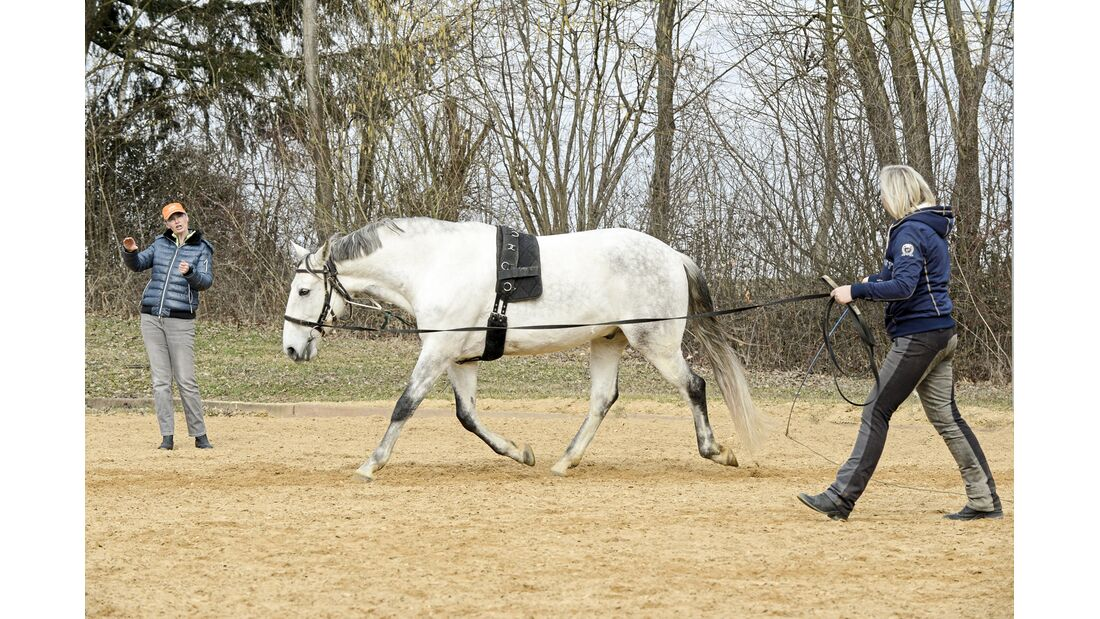cav-201906-cavallo-coach-11-gross-lir2597-v-amendo (jpg)