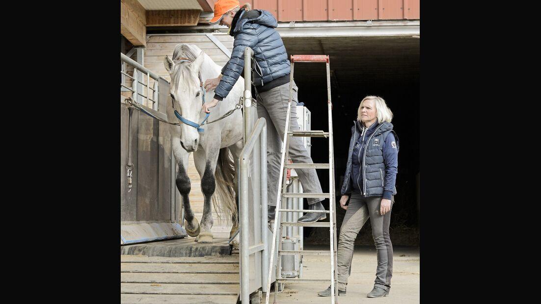cav-201906-cavallo-coach-12-lir2722-v-amendo (jpg)