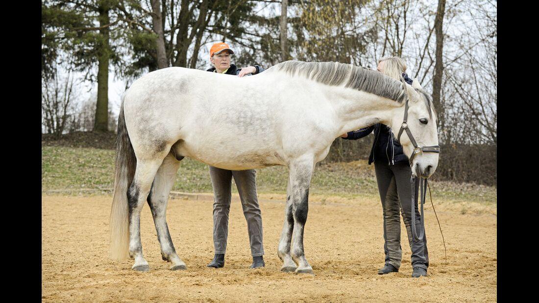 cav-201906-cavallo-coach-3-gross-lir1980-v-amend (jpg)