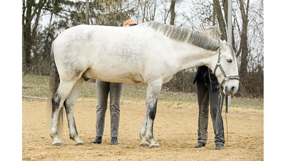 cav-201906-cavallo-coach-6-lir1990-v-amendo (jpg)