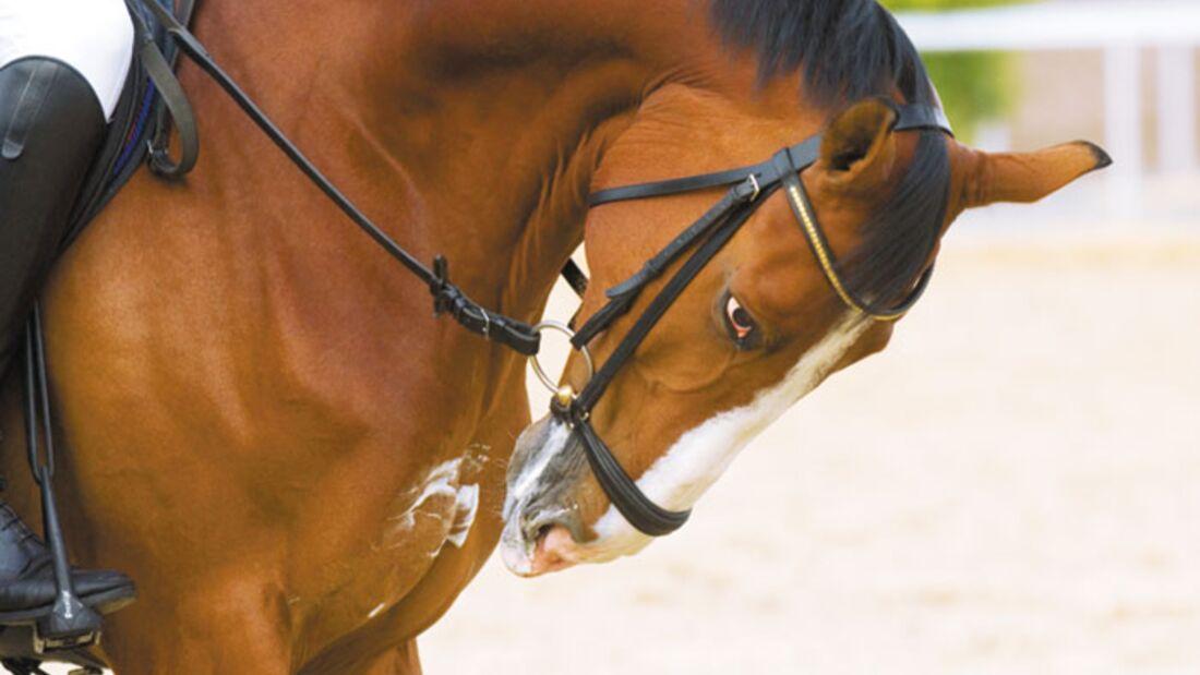 cav_News_Branche_0608_Hyperflexion. Internationale Reitervereinigung kritisiert die Rollkur