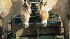 cav_News_Pferde_0408_Besucher dürfen nicht füttern