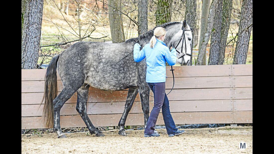 cav-dressur-an-der-hand-022017-04-m-rueckwaerts-lir4206 (jpg)