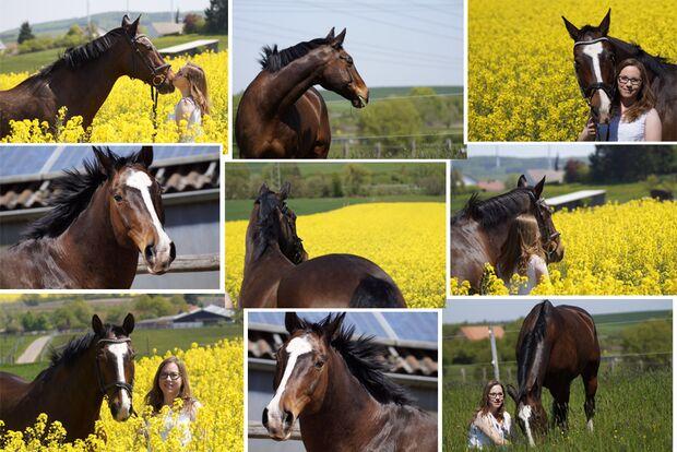 cav-fotowettbewerb-bde-haas-159-helena-ranger-img1514 (jpg)