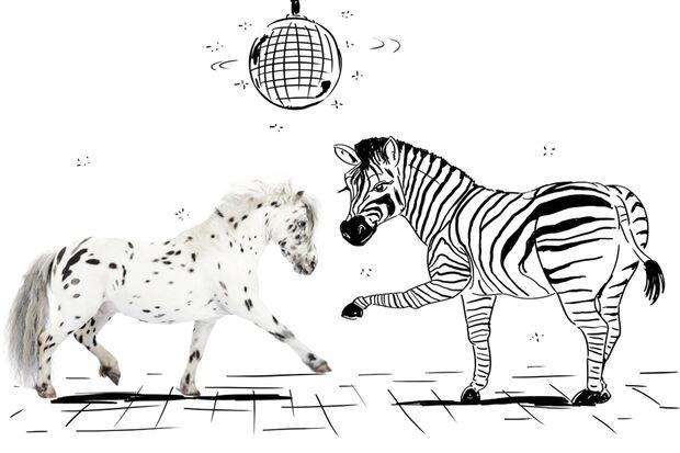 cav-lancelot-small-love-lir3757-fordert-zebrafrau-zum-tanz-aif-in-diso (jpg)