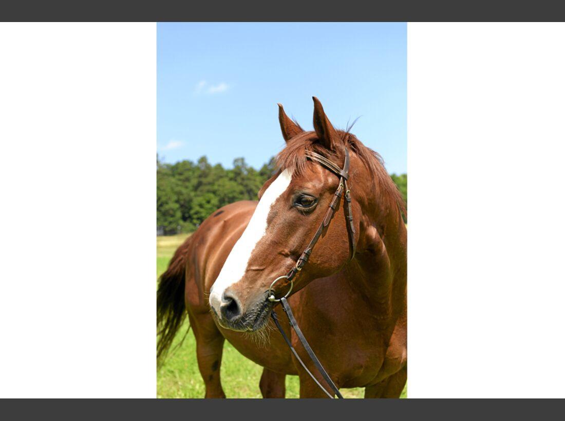 cav-pferde-fotografieren-1-kompaktkamera-lir9980 (jpg)