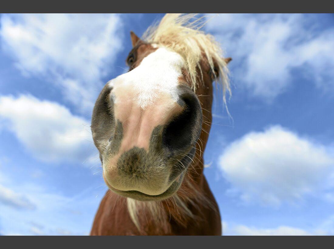 cav-pferde-fotografieren-1-lir3426 (jpg)