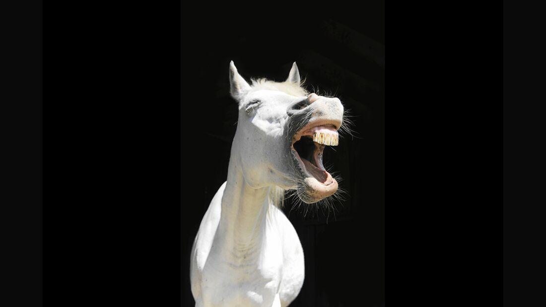 cav-pferde-fotografieren-1-lir3545 (jpg)