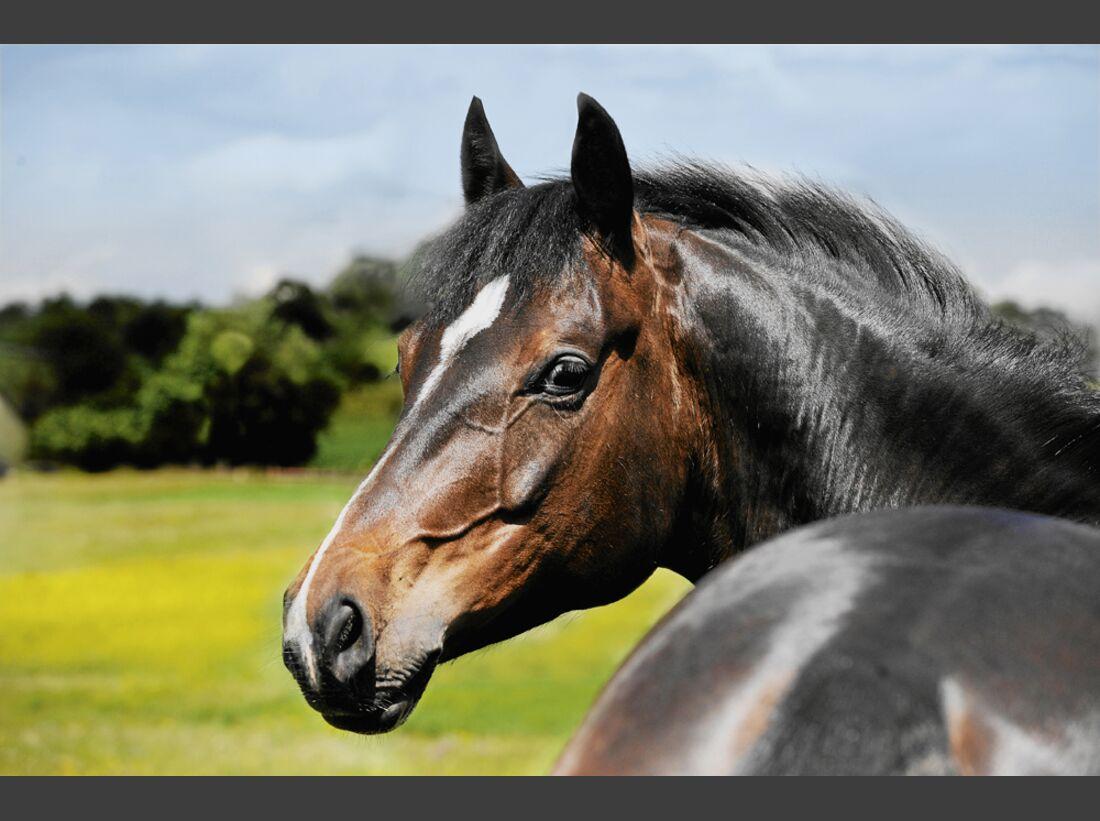 cav-pferde-fotografieren-1-meg-ryan-lir2565 (jpg)