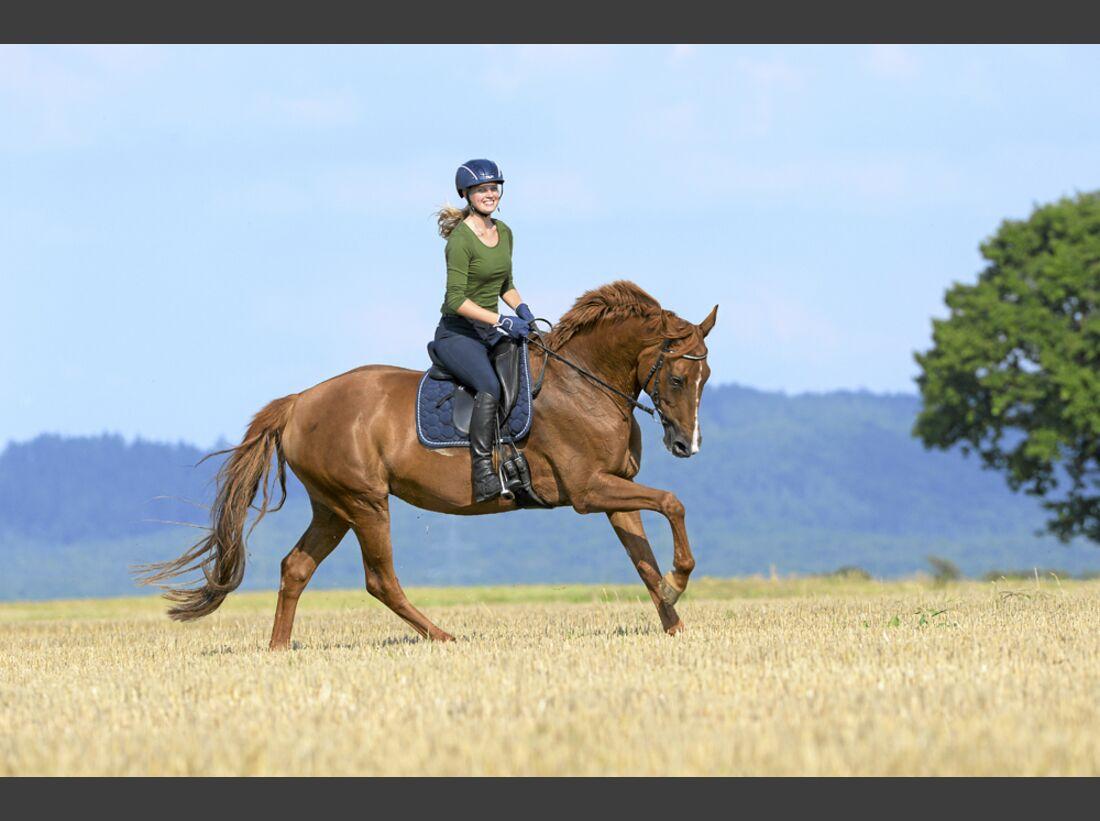 cav-pferde-fotografieren-2-lir4872 (jpg)