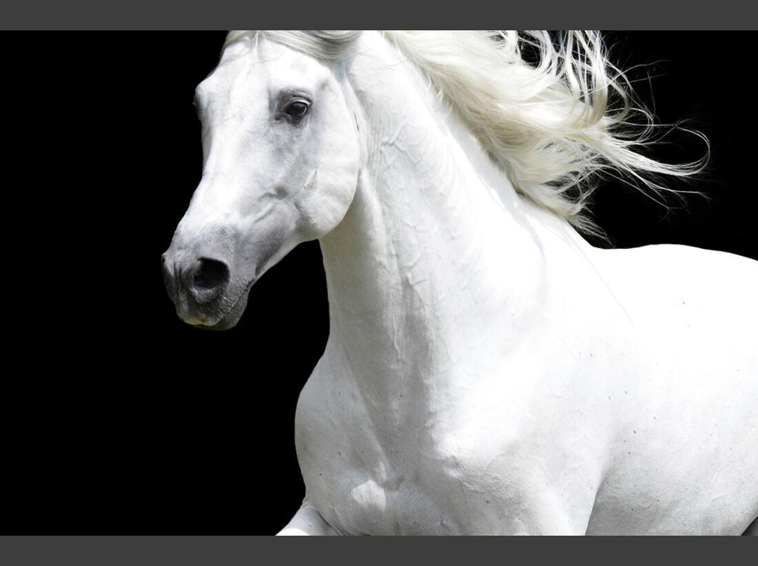 cav-pferde-fotografieren-2-lir7241_2 (jpg)