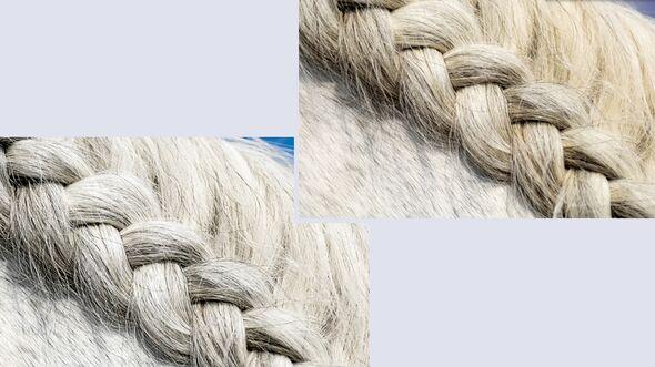 cav-pferde-fotografieren-3-lir7613-1 (jpg)