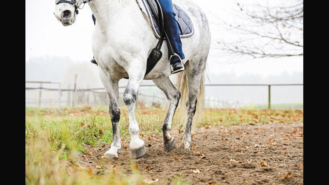 cav-starke-pferdebeine-6-lir3170 (jpg)