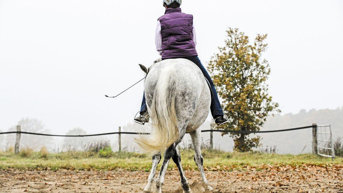 cav-starke-pferdebeine-aufmacher-lir2764 (jpg)