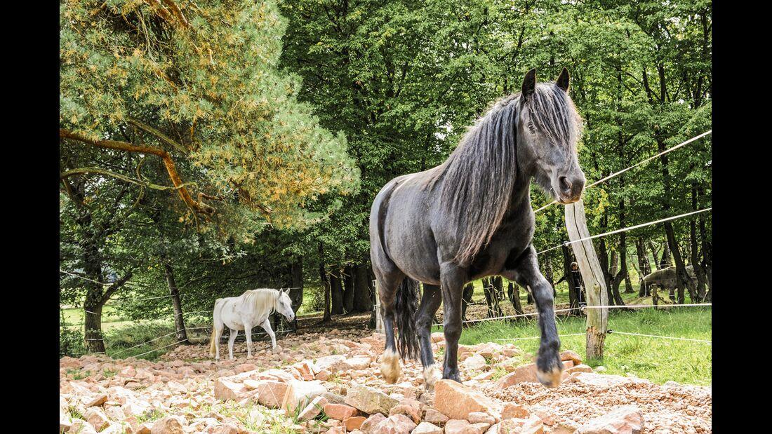 cav-starke-pferdebeine-lir9311 (jpg)