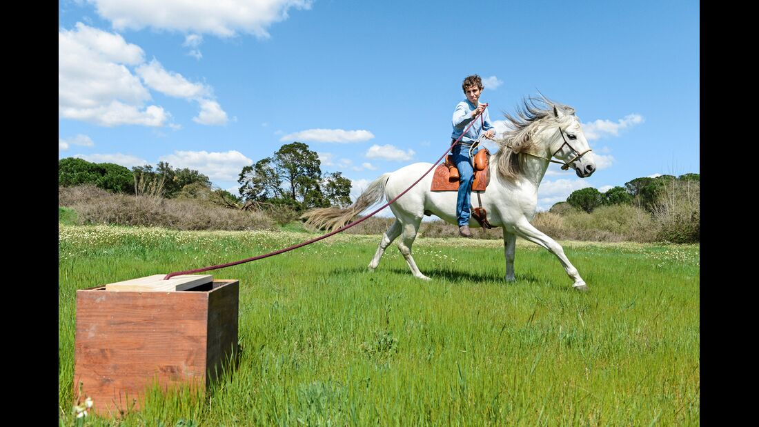 Spiele Mit Dem Pferd